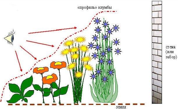 Клумба постоянного цветения схема