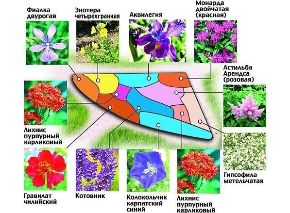 Схемы клумб однолетних цветов