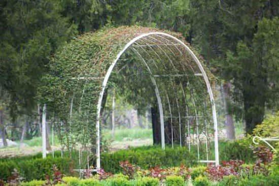 Опора для винограда из пластиковых труб своими руками фото