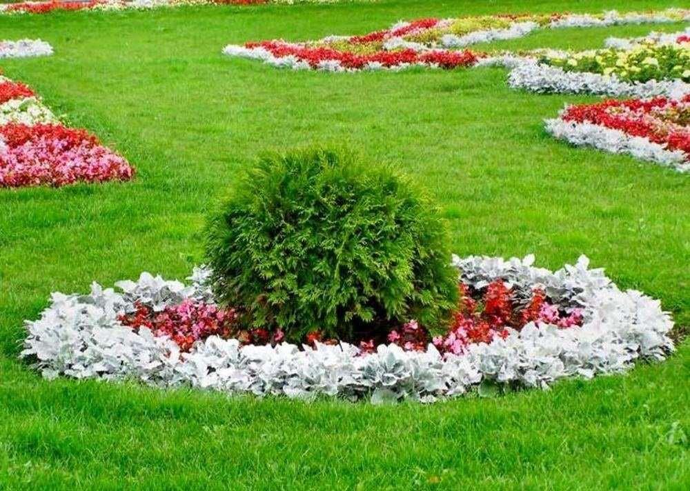 Цветущие газоны своими руками 13