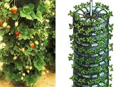 Вертикальное выращивание клубники в модулях 68