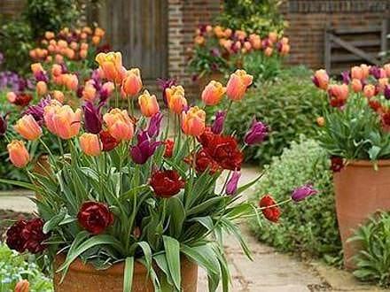 Какие цветы посадить зимой