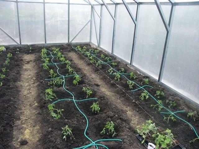 Система полива для огорода