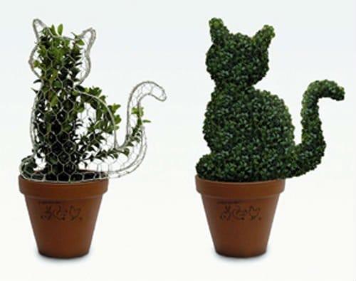 Топиарий из растений и цветов