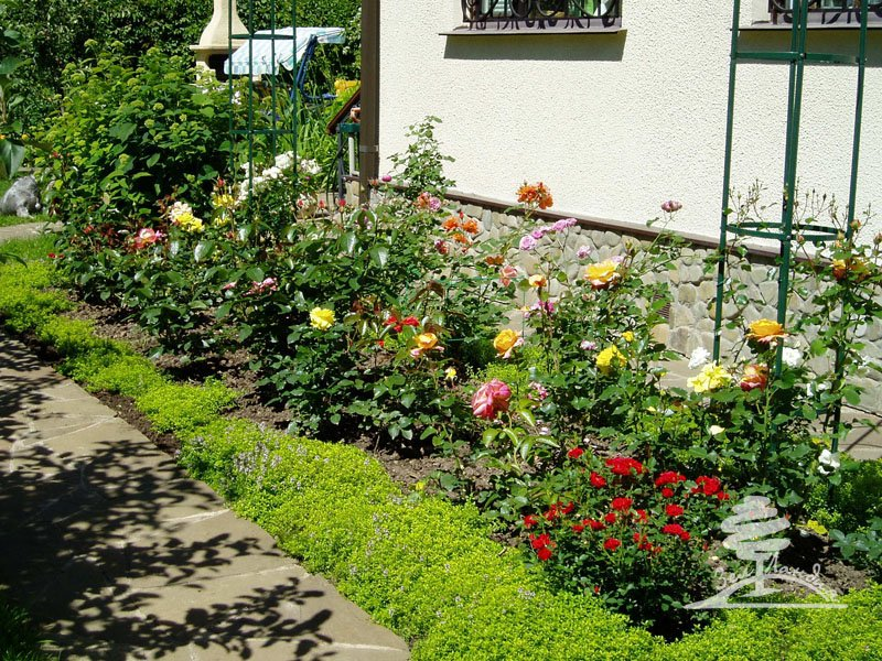 Розарий на даче своими руками фото садовый  418