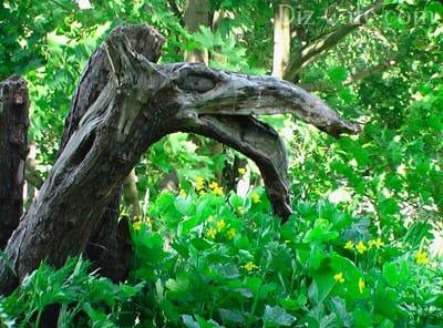 Все про рутарий або як зробити сад з старих пнів і коріння своїми руками