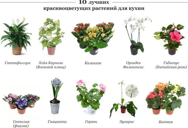 Перечень цветов комнатных 114