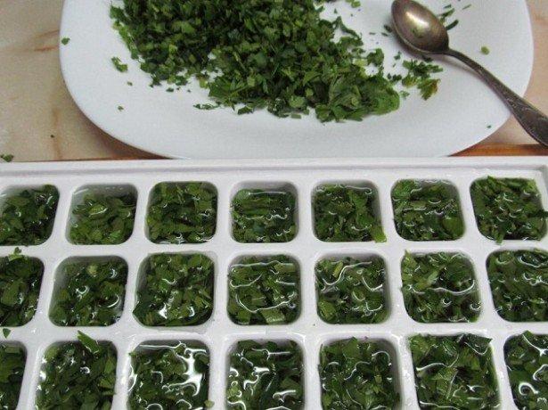 Як заморозити базилік на зиму – способи заморозки пряної зелені + Відео
