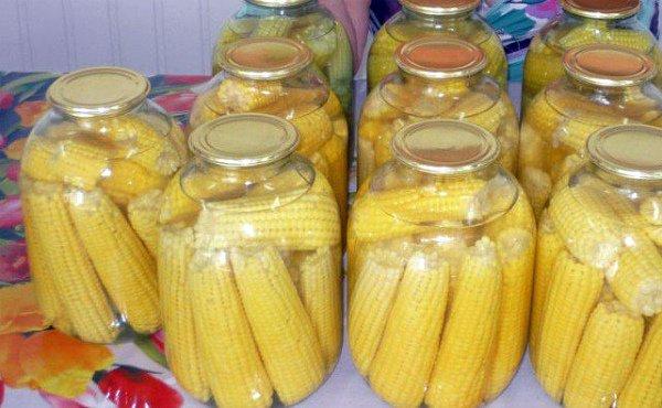 Как хранить кукурузу на зиму в домашних условиях