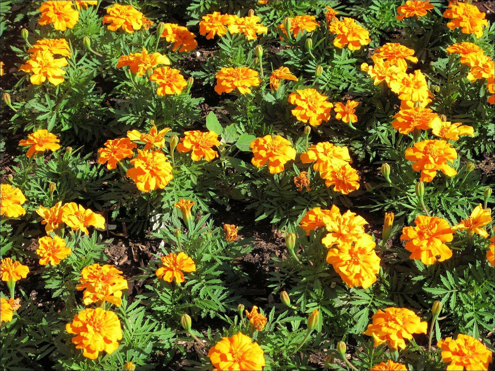 Посадка цветов под зиму - Сад и огород 6