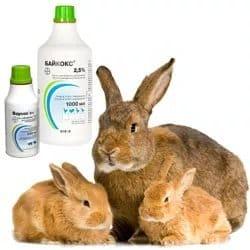 Байкокс: інструкція по застосуванню для кроликів та інших тварин