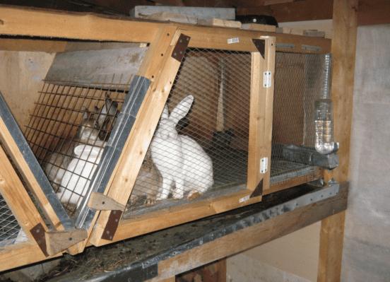 Как построить клетку для домашнего кролика своими руками 37