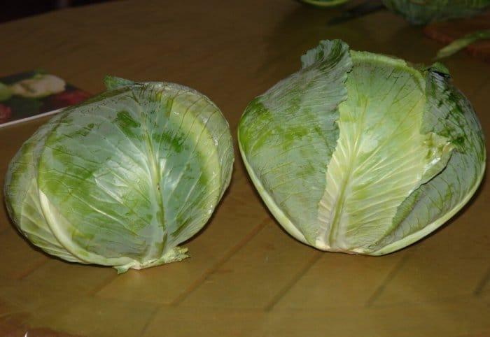 Голландські сорти білокачанної капусти