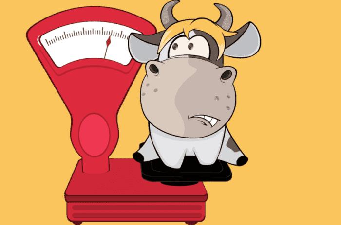 Як дізнатися, скільки важить бик, без ваг різними способами