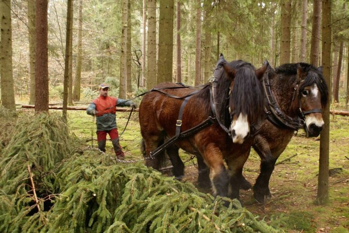 Робочі коні: вимоги до тварин, правила використання в роботах, утримання і годівля